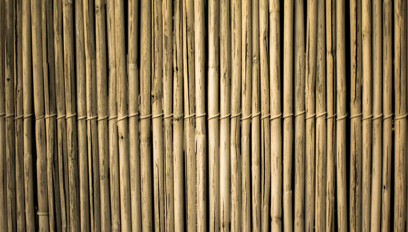 Carbon Free Dining Hospitality Influencer - The Dangers Of Bamboo & How Your Restaurant Can Be Sustainable